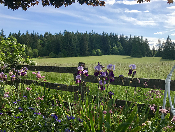 Flowers in front of a wooden fence, with a field and trees behind it.