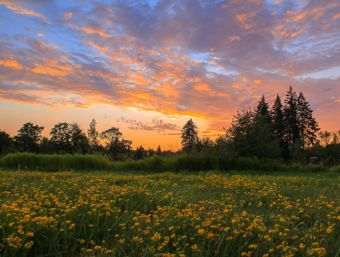A colorful sunset over a field of yellow and green.