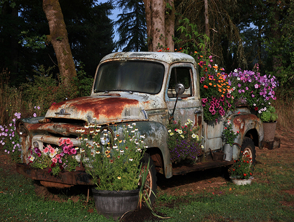 A 1957 International pickup has lots of colorful flowers growing out of it.