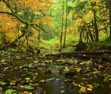 A creek in the woods in the fall.