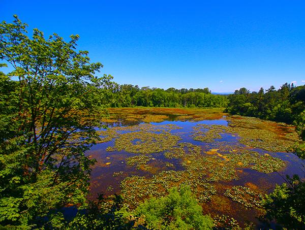 Trees line a swampy wetland.