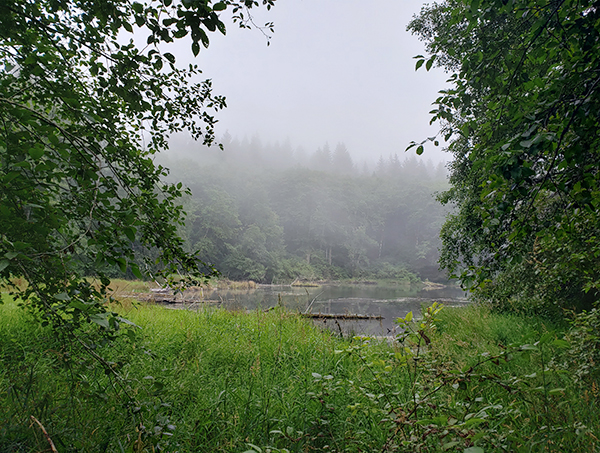 Fog rises over a pond.