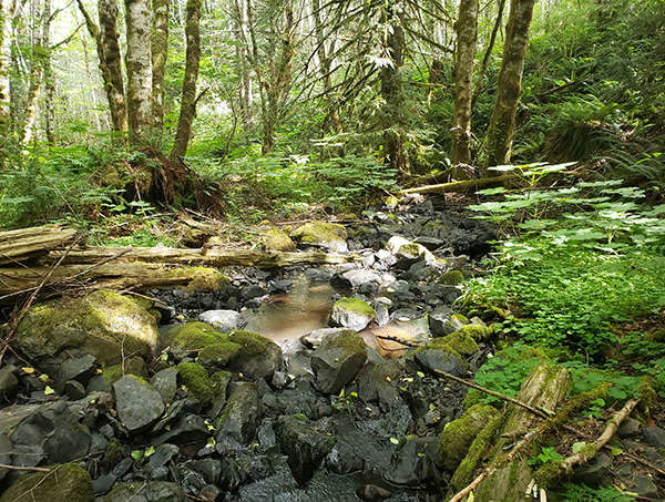 A small creek flows over rocks in a forest.