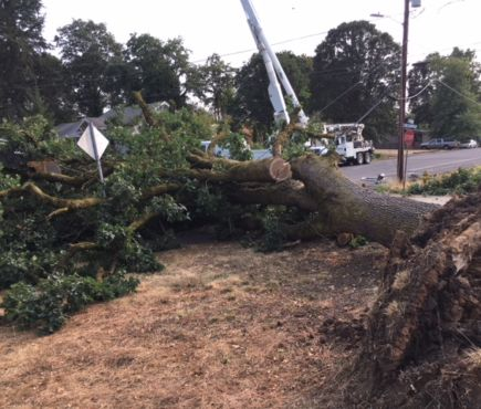 A large tree fell through power lines in St. Helens on August 12, 2018.