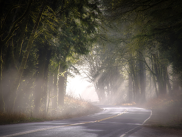 Rays of light fall through the trees on a winding highway.