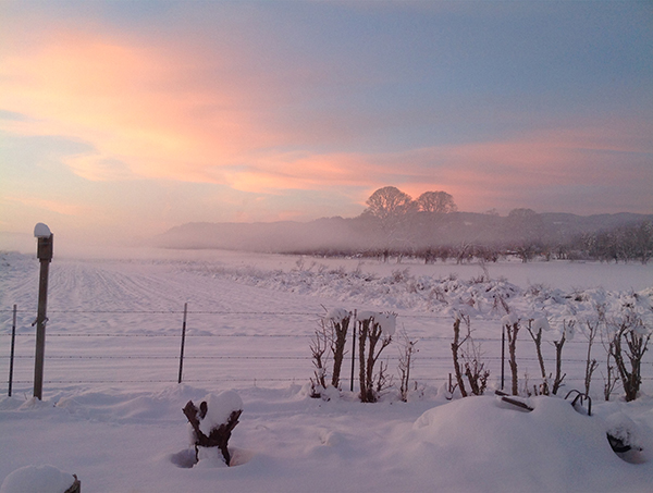 The sun rises over a snowy field.