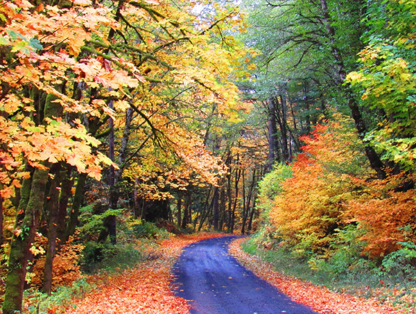 Fall leaves along a narrow road.