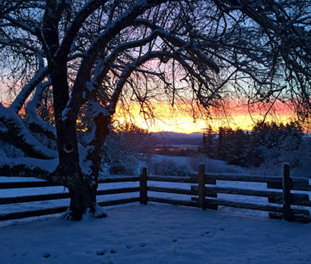 A tree and a fence with snow on the ground in front of a rising sun.