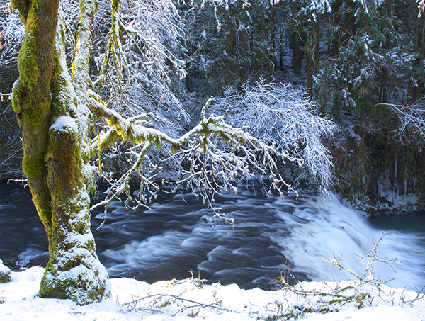 A snowy tree in front of a small waterfall.