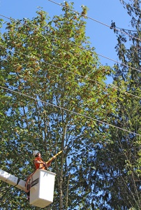 Lineworker in Lift Bucket in front of Tree